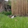 Ein warmer Tag im Garten (mit Maschinengewehr)